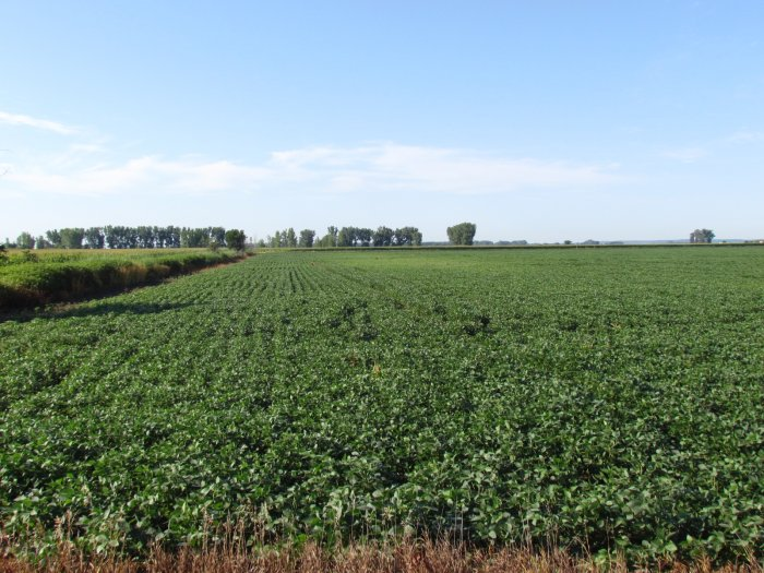 LAND AUCTION 140.47 Acres m/l, Lincoln Township Sec 22 and 23, Monona County, IA